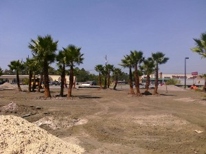 Washingtonia Palm installation at Holiday Inn in Waycross, Georgia.